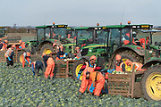 Migrant workers picking cabbages near Boston. Boston had the highest proportion of votes for Brexit in mainland UK. Boston in Lincolnshire was once a sleepy rural town. Since early the 21st century a large influx of economic migrants mainly from Eastern Europe have found work across Lincolnshire, working for the minimum wage in agricultural and construction industries, doing jobs that locals don't to do. Towns have expanded sometimes by 10% during this period. British business needs the migrant workers to survive, but but local people voted the highest proportion for Brexit, 75% against 'Remain', in a protest vote against migrant workers.