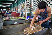"03 OCTOBER 2012 - BANGKOK, THAILAND:  A frog vendor sorts frogs in Khlong Toey Market in Bangkok. Thais eat frogs. Khlong Toey (also called Khlong Toei) Market is one of the largest ""wet markets"" in Thailand. Thousands of people shop in the sprawling market for fresh fruits and vegetables as well meat, fish and poultry every day.       PHOTO BY JACK KURTZ"