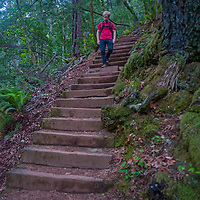 A hiker walks down stairs between ferns and lush undergrowth on the Cataract Creek Trail up Mount Tamalpais in Marin County, California.