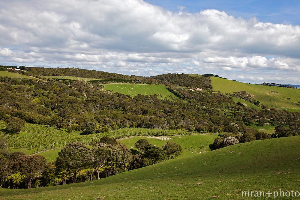 Rolling Hills of Waiheke Island