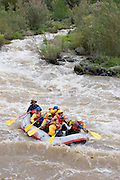 River Rafters in whitewater on the Rio Grande, vertical