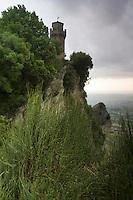 Ephedra (Ephedra major) on the cliff's edge of Monte Titano, third tower in the background, San Marino.