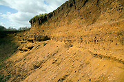 Layers strata Red Crag sedimentary rock in former quarry pit Sutton Suffolk England