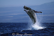 humpback whale, Megaptera novaeangliae, breaching, Hawaii Island, #1 in sequence of 6; caption must include notice that photo was taken under NMFS research permit #587