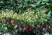 Mokihana berries and Maili Lei, Kauai, Hawaii.