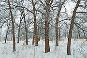 Winter in the Seine River Forest<br />Winnipeg<br />Manitoba<br />Canada