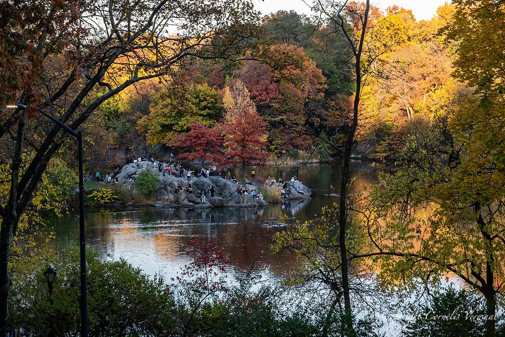 The Hernshead in Central Park