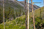 Backpacking in the Bob Marshall Wilderness, Montana, USA