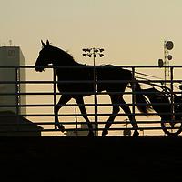 Standardbred Racing 2011 - Kentucky