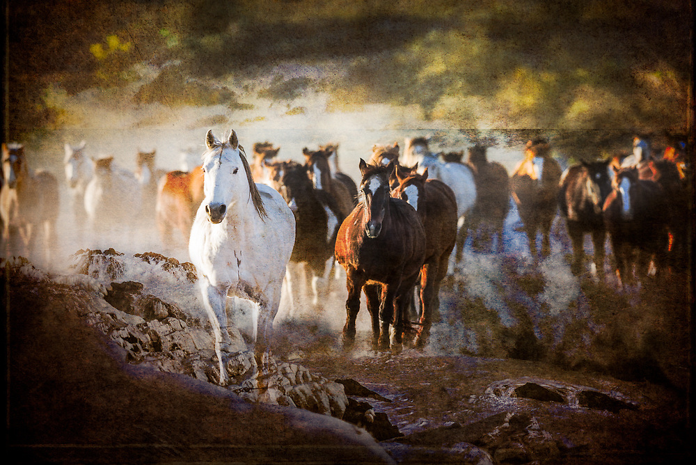 NEW Works by Craig W. Cutler Fine Art / DesignLIFE. <br /> <br /> Drama and Beauty, Light and Texture, all artistically conveyed in this HIGHLY-LIMITED Equestrian, Coastal, Botanical and Natural edition of Fine Art artworks. <br /> <br /> Shot with Canon & Leica bodies and lenses, these are Craig Cutler's latest American West and American Coastal artworks.