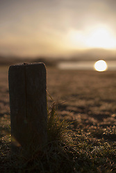 Dew drops on grass and wooden post during sunrise, Renesse, Schouwen-Duiveland, Zeeland, Netherlands