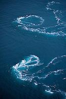 Whirlpools of Saltstraumen.Atlantic marine life, Bodö, Norway
