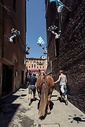 Italy, Siena, the Palio: one horse that will be used for the Parade before the race is accompnied to theMunicipality Courtyard