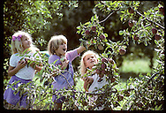 Molly Rouse (hair ribbon), Kady Scott & Whitney Gulick (headband) picking apples, Centennial Farms Missouri