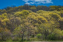 Springtime Trees in Montauk, NY