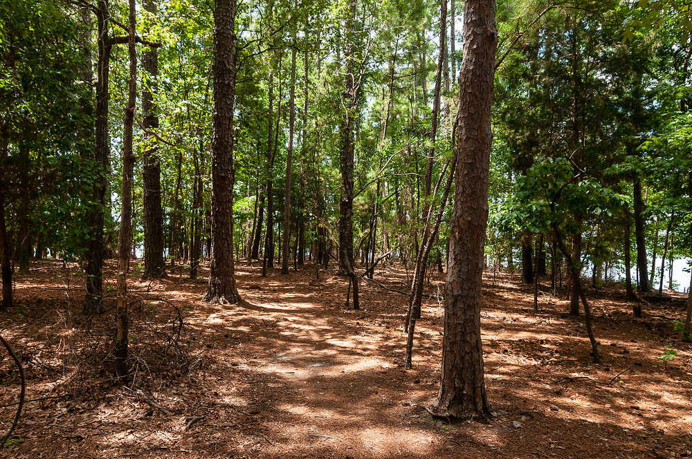 Short trail winding through the woods at Dreher Island State Park in Prosperity, South Carolina on Sunday, August 2, 2020. Copyright 2020 Jason Barnette