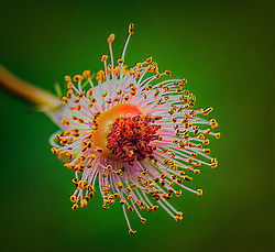 Well, everything in the garden is pretty much dead now, so time for a different perspective on flowers :)