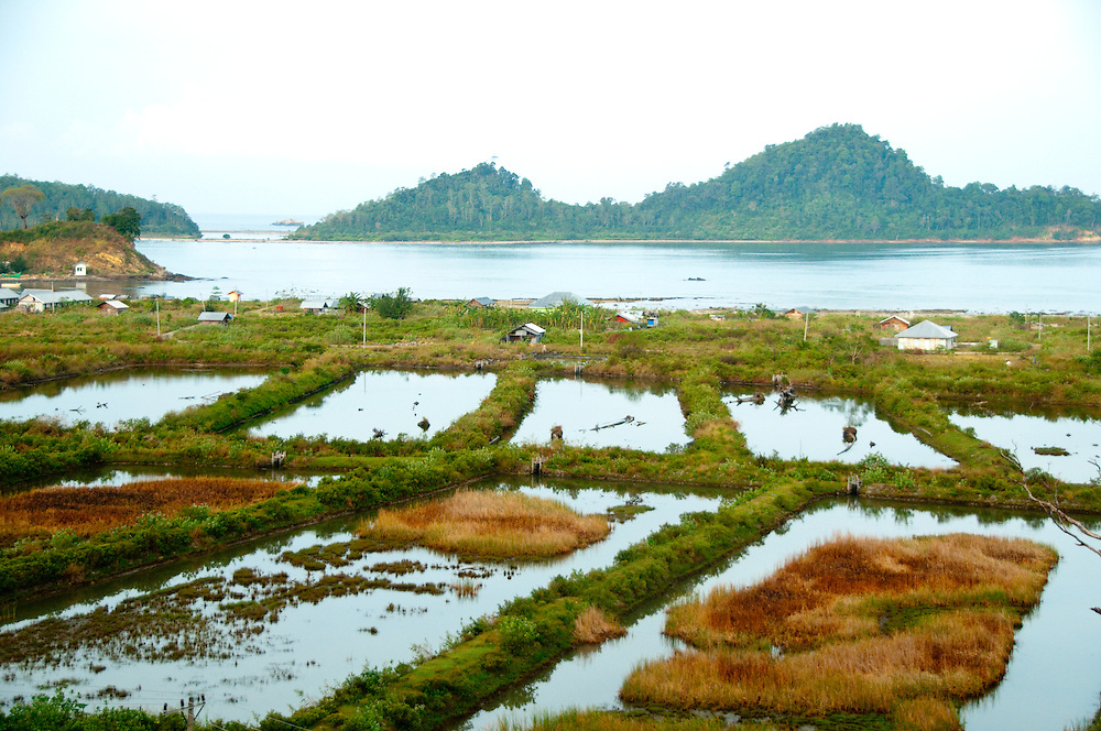 Indonesia, Sumatra, Aceh. Saltwater intrusion caused by the tsunami destroyes rice paddies