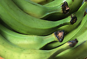 Close up selective focus photograph of a bunch of plantains