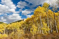 It was a beautiful afternoon for a hike in Little Horn Canyon. This rarely visited canyon had better fall colors than anywhere else I've been in the Bighorn Mountains. These aspen trees were some of the tallest I've seen.