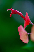 Belo Horizonte_MG, Brasil...Detalhe de uma flor em Belo Horizonte, Minas Gerais...A flower in Belo Horizonte, Minas Gerais...Foto: JOAO MARCOS ROSA / NITRO