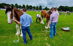 Biggar, South Lanarkshire, Scotland 23 July 2016<br /> <br /> Judging horses in the show ring.<br /> <br /> (c) Andrew Wilson | Edinburgh Elite media