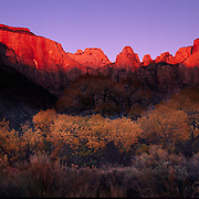 The first rays of sunrise strike enormous West Temple in Zion Canyon