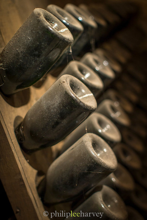 Close-up of wine bottles covered in dust in cellar, France