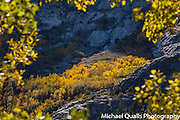 Hillside Aspen Grove in the Spotlight from the Double Eagle