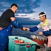 Hasegawa father and son team preparing bait and lines in the pre-dawn hours for deep sea fishing