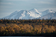 Autumn colors adorn the shoreline of Naknek Lake while Mt Mageik stands silent in the background.