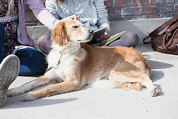 Woman stroking her dog with friend using digital tablet, Munich, Bavaria, Germany