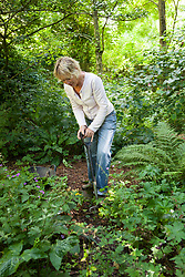 Propagating snowdrops by division. Carol Klein digging up clumps of Galanthus 'S. Arnott'