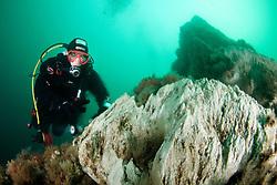 Kleiner Little Stry tan, Geothermaler unterwasser Schornstein, Kamin, Schlot, Geothmal underwater chimney, Akureyri, Eyjafjord, Groenlandsee, Nord Island, Eyafiord, Greenland Sea, North Iceland, Eyjafjördur, Eyjafjordur, MR yes