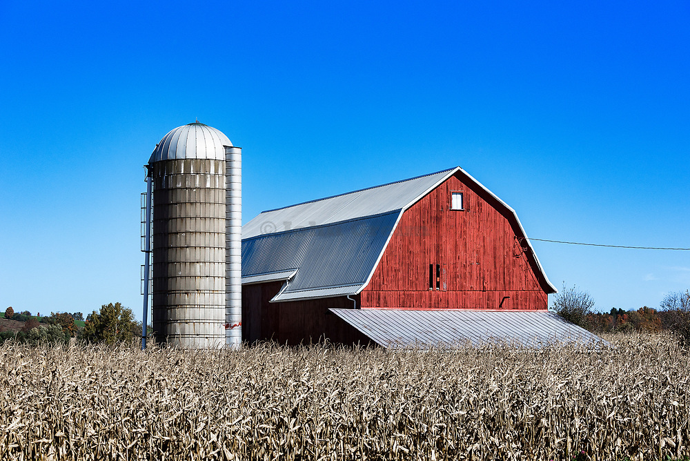 Rustic red barn and corn field, West Winfield, New York, USA