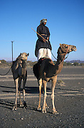 Proud beduins standing on a camel, Central Oman,