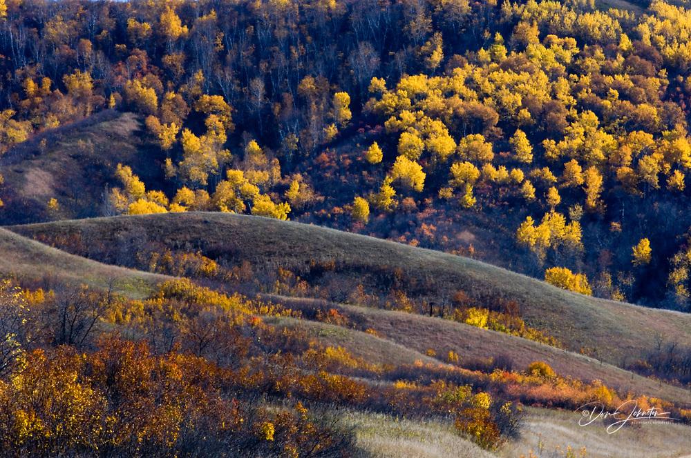 Qu'Appelle Valley- aspens on valley slopes, Qu'Appelle Valley, Saskatchewan, Canada