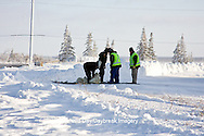 01874-11713 Polar Bear (Ursus maritimus) biologists preparing to airlift bear from Polar Bear Compound, Churchill MB