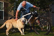 USA,  Oregon, Keizer, Labrador Retriever with her master and hs bike. MR