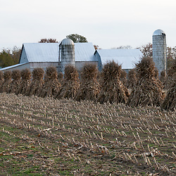 Row of corn shocks in a harvested field.