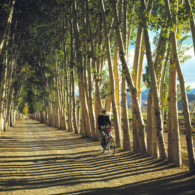 A bicyclist peddles through a poplar lined corridor on a road in the Bamian Valley of Afghanistan.
