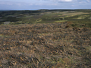 Grouse Moor, North York Moors National Park, UK