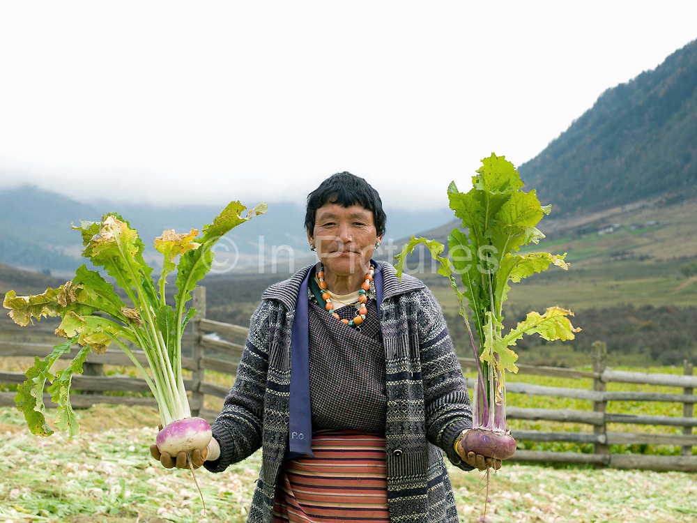 A farmer holds freshly harvested turnips in Dhazheyjhab village, Phobjikha valley, Bhutan. Turnips are stored over the winter and used by farmers as winter feed for their cattle.