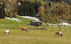 THEMENBILD - Pferde auf einer Weide mit kleinen Schneefeldern aufgenommen am 29. April 2017, Thumersbach, Österreich // Horses on a pasture with small snow fields at Thumersbach, Austria 2017/04/29. EXPA Pictures © 2017, PhotoCredit: EXPA/ JFK
