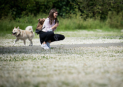 © Licensed to London News Pictures. 07/06/2021. London, UK. A woman is seen taking a picture of flower covered fields in Regents Park, central London on a warm summers morning. Photo credit: Ben Cawthra/LNP