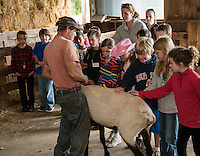 Jeff Keyser gives Mrs. Phillip's 4th graders from Gilmanton Elementary a chance to feel a freshly sheared Suffolk Sheep during their field trip to Ramblin' Vewe Farm in Gilford on Wednesday.  (Karen Bobotas/for the Laconia Daily Sun)