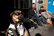 Dog who is called 'Taliban' wearing Gucci sunglasses sits with street drinkers outside a homeless hostel in Soho, London. The dog is a mix between a Rottweiler and a Japanese Akita.