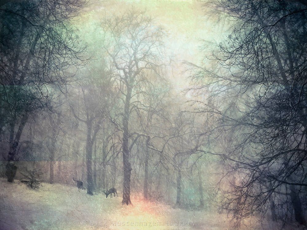 Snowy landscape. Textured and colored photography<br /> Prints & more: <br /> http://society6.com/DirkWuestenhagenImagery/winTer-sTorm-35l_Print