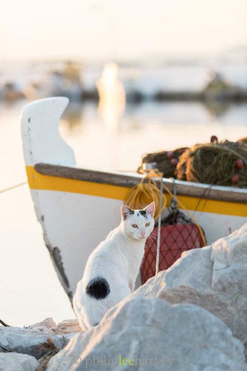 Cat sitting by moored in harbor fishing boat and looking at camera at sunrise, Skala Kallonis, Lesbos, Greece