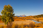 This Lone Tree Frames the Buffalo Fork of the Snake River in Grand Teton National Park